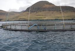 Færøysk lakseprodusent er den første i bransjen til å stoppe all flyfrakt