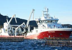 NFT bygger om Havtrans for 60 millioner