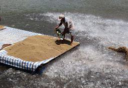 Fant farlig parasitt i oppdrettsfisk fra Vietnam