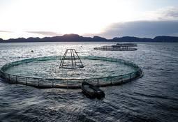 Nå har laksepengene nådd kommunene – Frøya får mest