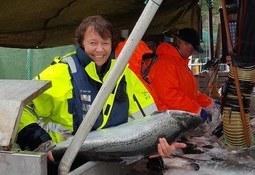 Stamfisk på 20 kg i lukket merd