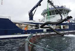 Ny risikovurdering om transportvannet fra brønnbåter