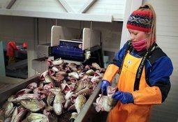 Forenkler betalingen for tilsyn med fiskemottak