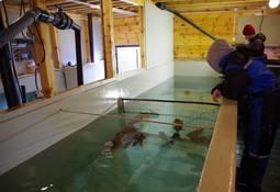 Skjerneset Fisk har nådd flere milepæler