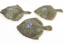 Stolt Sea Farm investerer mer i flatfisk
