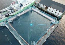 Bolaks setter ut 200 000 postsmolt i lukka merd