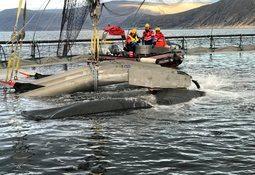 Pure Shipping med sin første mekaniske avlusing i Finnmark