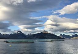 Mattilsynet opphever kontrollområdet for ILA i Nordland