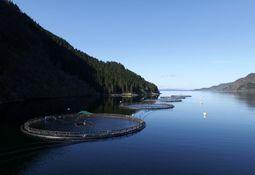 Flokenes Fiskefarm har hatt si fyrste lakserømming