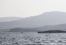 Salmon farmer chooses tougher nets after escape