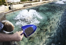 IFFO questions antibiotic-resistant fishmeal claims
