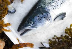 'Gratifying growth' as Norway lifts salmon exports
