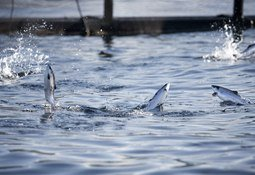 USDA releases $1.2m for aquaculture research