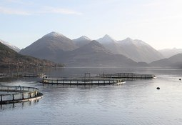 Scots government's three-part plan for aquaculture