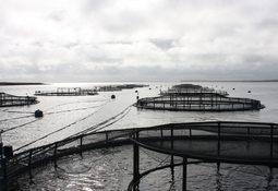 Swedish court halts three fish farms