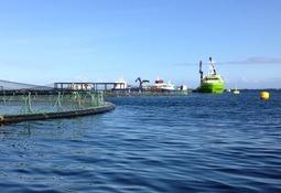 Armasur: varias empresas se unirán a querella de Naviera Orca