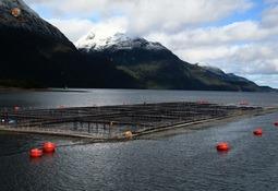 Investigación relaciona salmonicultura y presencia de oxígeno disuelto en el agua