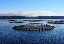 Salmonicultora australiana Tassal se integra a Global Salmon Initiative