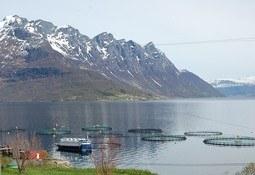 Salmones Austral plantea estudiar el modelo noruego para transferirlo a Chile