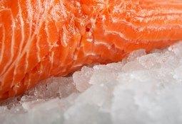 """Ofrecen """"salmón con aumento de 100% de omega 3"""""""