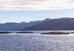 Valor de exportación de salmón escocés alcanza un récord de US$ 830 millones