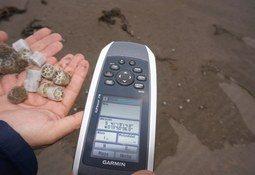 Sealand Aquaculture establecerá programa de cumplimiento ante multa de la SMA