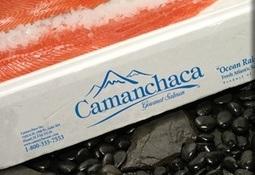 Aumento de precio del salmón genera utilidades en Camanchaca