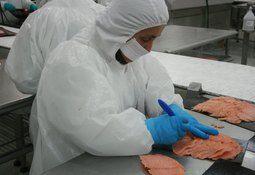 Exportaciones de salmón aumentan en US$ 701 millones y en Japón alcanzan máximo histórico