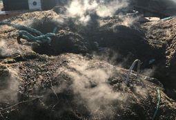 Cooke: mejillones pueden haber causado el colapso y posterior escape de salmones