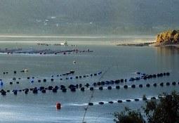 Seminario presentará tecnologías para mejorar competitividad de acuicultura