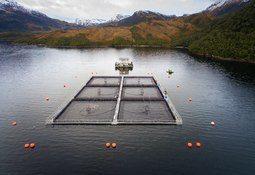 Salmonicultoras del grupo Skyring se unen para enfrentar el virus ISA