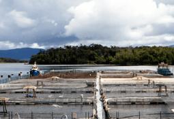 A la venta división salmonicultora de Friosur