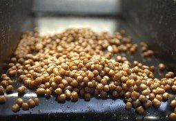 Evaluación de la harina de soya fermentada como ingrediente en las dietas