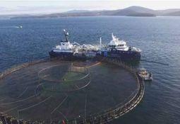 Planean futuro de industria salmonicultora en Tasmania