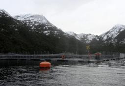 Presentan proyecto de ampliación de centro de cultivo de salmónidos en Magallanes