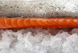 Precio del salmón chileno disminuye en Brasil y EE.UU.