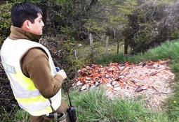Detectan 150 unidades de salmones en vertedero clandestino