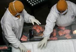 Organización de sindicatos solicita generar políticas de respeto dentro de la industria salmonicultora