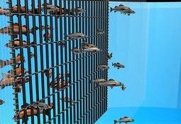 Flexi-Panel apunta a mejorar la rentabilidad de los peces cosechados
