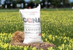 AluProt-CGNA se cultivará en la Región de Los Lagos