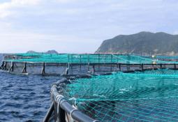 Acuicultura podría ser el principal proveedor de alimentos de origen acuático