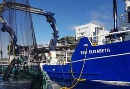 Filtro electrostático para piojo de mar alcanza un 100% de efectividad