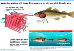 ¿Calentamiento global afecta al tamaño de los peces?
