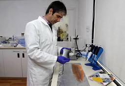 Piel de salmón podría ayudar a crear órganos humanos
