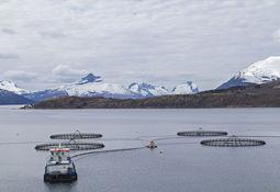 Lanzarán convocatoria de Programa Tecnológico Corfo para el desarrollo de la acuicultura oceánica