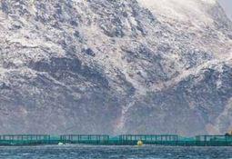 Sospecha de ISA en el norte de Noruega