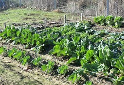 Construirán huertos e invernaderos con desechos inorgánicos de la salmonicultura