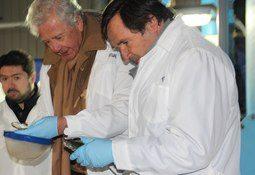 Magallanes: Sofofa destaca rol de la industria salmonicultora