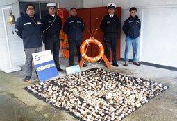 Aysén: Detectan más de 700 locos en embarcaciones ligadas a la acuicultura