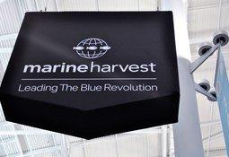 Ecuador se interesa por el salmón de Marine Harvest